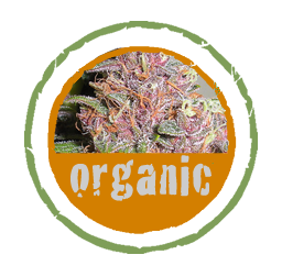 Organic Medical Marijuana Buds